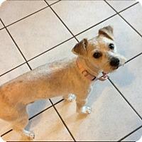Adopt A Pet :: Skipper - Dallas, TX