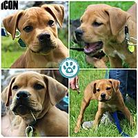 Adopt A Pet :: Icon - Kimberton, PA