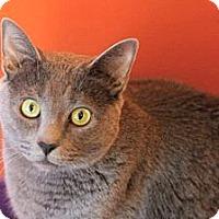 Adopt A Pet :: Missy - Topeka, KS