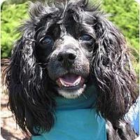 Adopt A Pet :: Hilda - Encinitas, CA