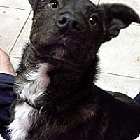 Adopt A Pet :: Monty - Chewelah, WA