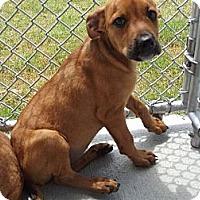 Adopt A Pet :: Kim - South Jersey, NJ