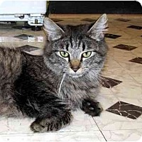 Adopt A Pet :: Edith - Alexandria, VA