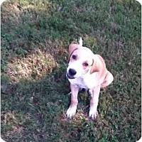 Adopt A Pet :: Vino - In CT! - Adamsville, TN
