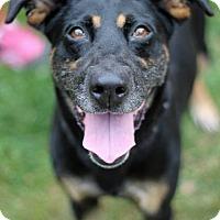 Adopt A Pet :: Zoey - Tinton Falls, NJ