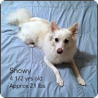 Adopt A Pet :: Snowy - Elmhurst, IL