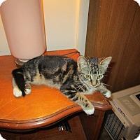 Adopt A Pet :: Paul - Speonk, NY