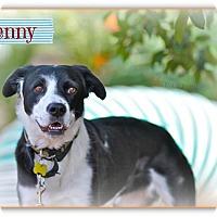 Adopt A Pet :: Jenny - Tempe, AZ