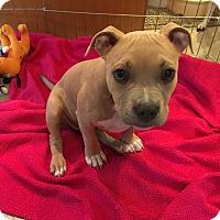 Adopt A Pet :: Raven - bridgeport, CT
