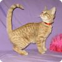 Adopt A Pet :: Cinnamon - Powell, OH