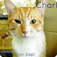 Adopt A Pet :: Charles - Hamilton, ON