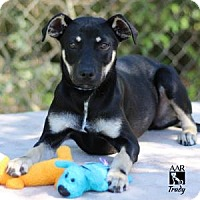 Adopt A Pet :: TRUDY - Tomball, TX
