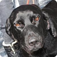 Adopt A Pet :: Buck - Salem, MA