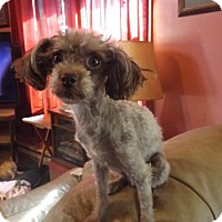 Adopt A Pet :: Zola - Zaleski, OH