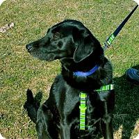 Adopt A Pet :: Bic - Ridgefield, CT