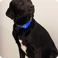 Adopt A Pet :: Razor - West Branch, MI