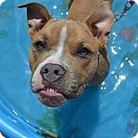 Adopt A Pet :: April - Pittsbugh, PA