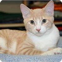 Adopt A Pet :: Hanz - Racine, WI