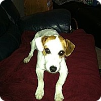 Adopt A Pet :: Steve in Beaumont - Houston, TX