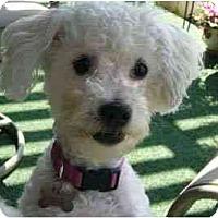Adopt A Pet :: Lexie - La Costa, CA