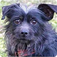 Adopt A Pet :: Doodle - Mocksville, NC
