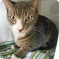 Adopt A Pet :: Slinky - Maywood, NJ