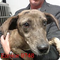 Adopt A Pet :: Eunice - Greencastle, NC