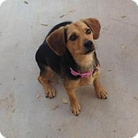 Adopt A Pet :: Maggie G - Phoenix, AZ