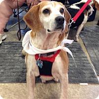 Adopt A Pet :: Solo - Dumfries, VA