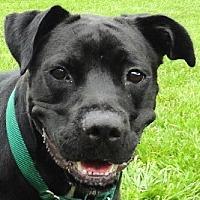 Adopt A Pet :: Sandler - Sarasota, FL