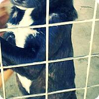 Adopt A Pet :: Guinness - Odessa, TX