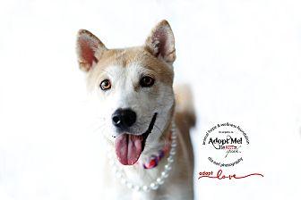 Jindo Mix Dog for adoption in Sherman Oaks, California - Mama