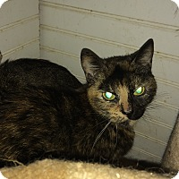Adopt A Pet :: Freckles - Roseburg, OR