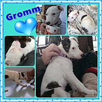 Adopt A Pet :: Gromm - Louisiana, MO