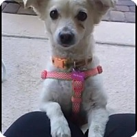 Adopt A Pet :: Sheep aka Sassy - Las Vegas, NV