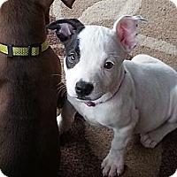 Adopt A Pet :: Trudy - Norwalk, CA