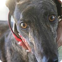 Adopt A Pet :: Buoy - Orange County, CA