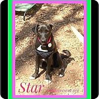 Adopt A Pet :: STAR - Milton, GA