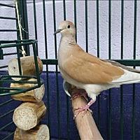 Adopt A Pet :: Tawny - Elizabeth, CO