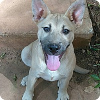 Adopt A Pet :: Billy - Lawrenceville, GA