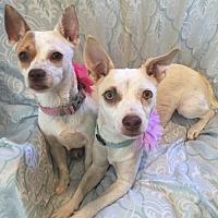 Adopt A Pet :: Taly & Tesa - BONDED SISTERS - Tomball, TX