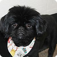 Adopt A Pet :: Sir Jenkins - Richmond, VA