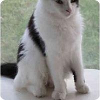 Adopt A Pet :: Baby Mama - Warren, MI