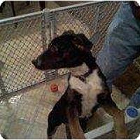 Adopt A Pet :: Piper - Alliance, NE