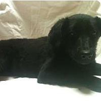 Adopt A Pet :: Pal - Glastonbury, CT