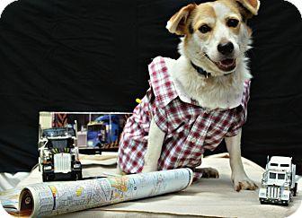 Beagle Mix Dog for adoption in Harrodsburg, Kentucky - Lucky