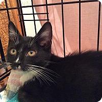 Adopt A Pet :: Noodle - Acme, PA