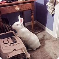 Adopt A Pet :: Barry White - Williston, FL