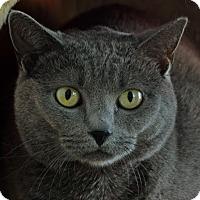 Adopt A Pet :: Emily - Norwalk, CT