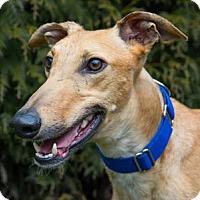 Adopt A Pet :: Express - Seattle, WA